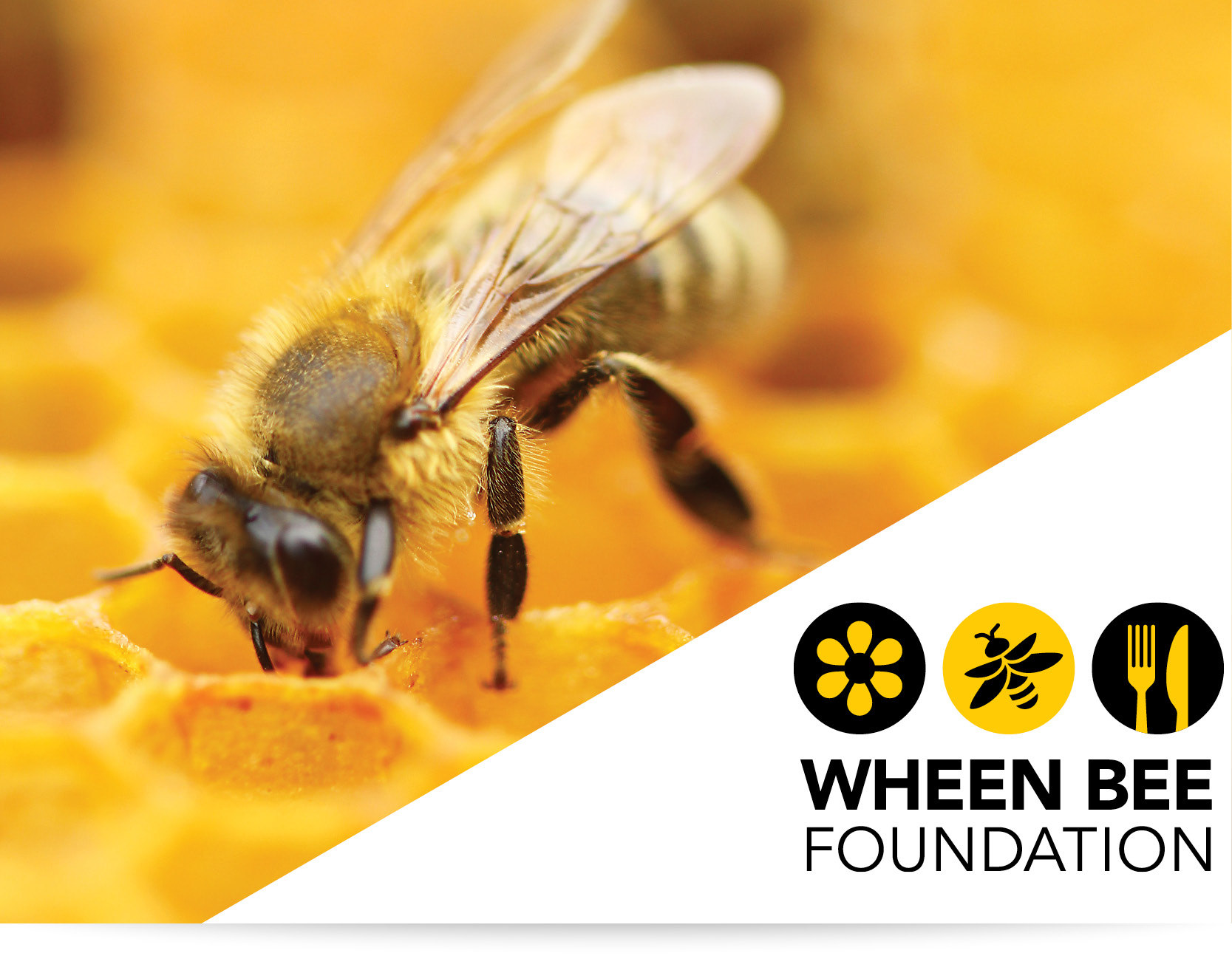 The Wheen Bee Foundation